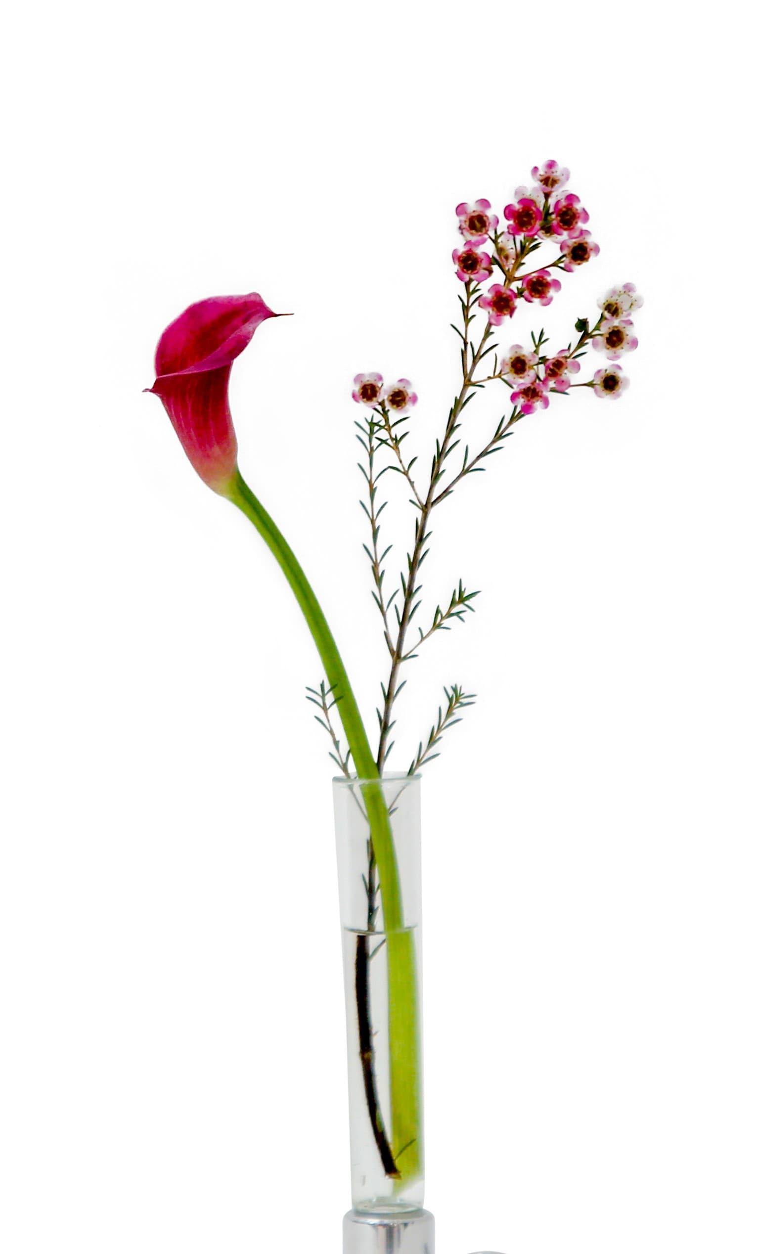 Flora Glass Insert